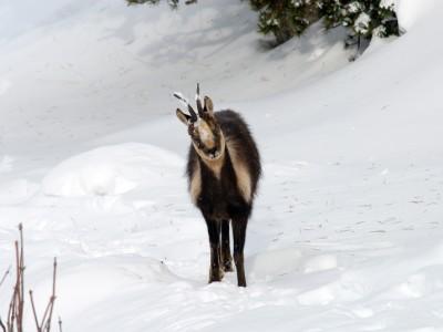 Crédit photo : L.Nédélec – Parc national des Pyrénées